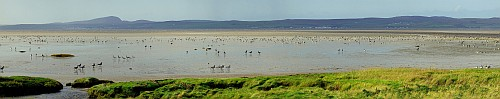 Loch Indaal Panorama with Geese
